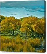 Driving Foliage Canvas Print