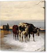 Driving The Herd Home In Wintry Landscape Canvas Print