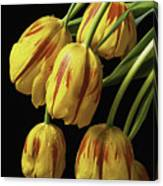 Drooping Tulips Canvas Print