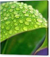 Droplets Of Hope Canvas Print