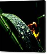 Droplets Of Water Canvas Print