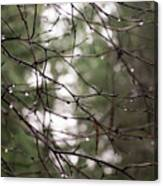 Droplets On Branches Canvas Print