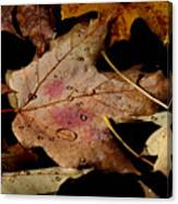 Droplets On Fallen Leaves Canvas Print