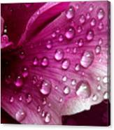 Droplets On Peony 1 Canvas Print