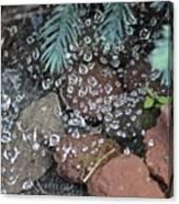 Droplets Over Web Canvas Print