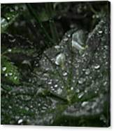 Drops And Leaf Canvas Print