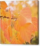 Drops Of Autumn Canvas Print