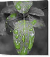 Drops Of Color 1 Canvas Print