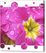 Bubbly Pink Raindrops  Canvas Print