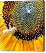 Drunken Bee Canvas Print