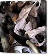 Dry As Bones Canvas Print