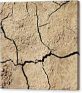 Dry Cracked Earth And Green Leaf Canvas Print