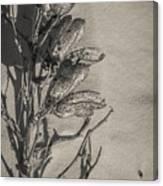 Dry Desert Canvas Print