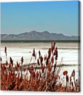 Dry Grasses At The Great Salt Lake Canvas Print