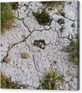 Dry Ground Canvas Print
