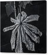 Dry Leaf Collection Bnw 2 Canvas Print