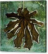 Dry Leaf Collection Wall Canvas Print