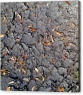 Dry Mudd Psl Canvas Print