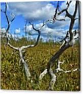 Dry Tree Canvas Print