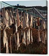 Drying Pieces Of Salt Cod In Bonavista, Nl, Canada Canvas Print