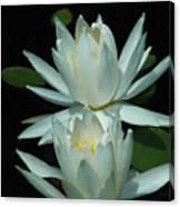 Dual Lilies Canvas Print