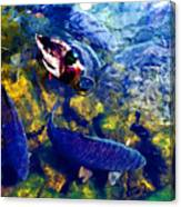 Duck And Carp Wc 2  Canvas Print