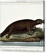 Duck-billed Platypus Ornithorhynchus Canvas Print