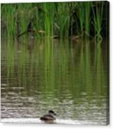 Duck Blinds Canvas Print