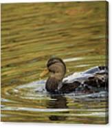 Duck Dip Canvas Print