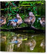 Duck Duck Duck Duck Canvas Print