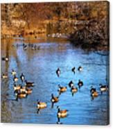 Duck Duck Goose Goose Canvas Print