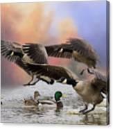 Duck Ducks 2 Canvas Print