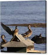 Duck Flyby Canvas Print