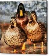 Duck - Id 16235-220308-3425 Canvas Print