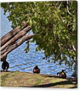 Duck Into The Shade Canvas Print
