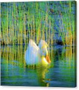 Duck On A Mission Canvas Print