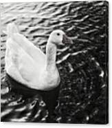 Duck On The Black Sea Canvas Print