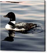 Duck On The Lake Canvas Print
