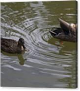 Duck Pair Canvas Print