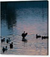 Duck Show Off Canvas Print