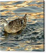 Duck Tracy Canvas Print