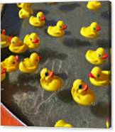 Duckies Canvas Print