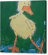 Duckling 3 Canvas Print