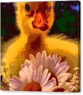 Fuzzy Duckling And Daisies Canvas Print