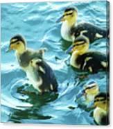Ducklings Digital Water Color Canvas Print