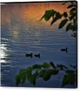 Ducks At Daybreak  Canvas Print