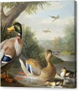 Ducks In A River Landscape Canvas Print