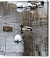 Ducks In Winter Canvas Print