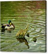 Ducks Life Canvas Print