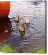 Ducks Mooning Canvas Print